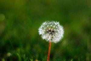 Online Wish List
